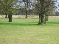 Lady in Black Bushey Park