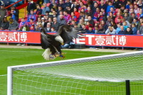 Crystal Palace 1-0 Aston Villa by cp forever - Apr 15 2014