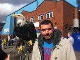 hemel eagle